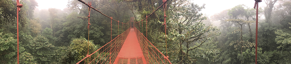 Bridge through rain forest in Vietnam